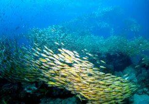 Plongée Nosy Be Madagascar Tropical Diving